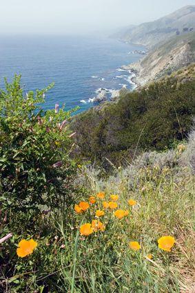 23 Best Coastal Region Project Images On Pinterest Coast