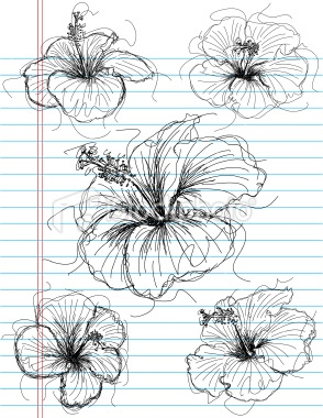best 25 hibiscus drawing ideas on pinterest