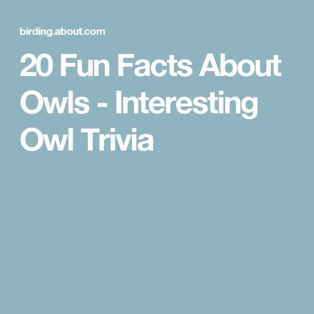 20 Fun Facts About Owls - Interesting Owl Trivia
