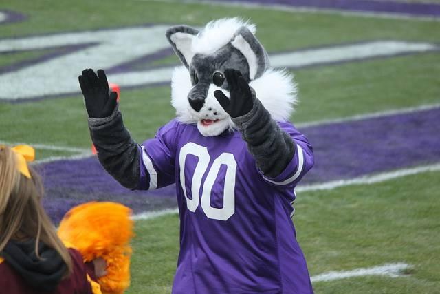northwestern university wildcats costume mascot the