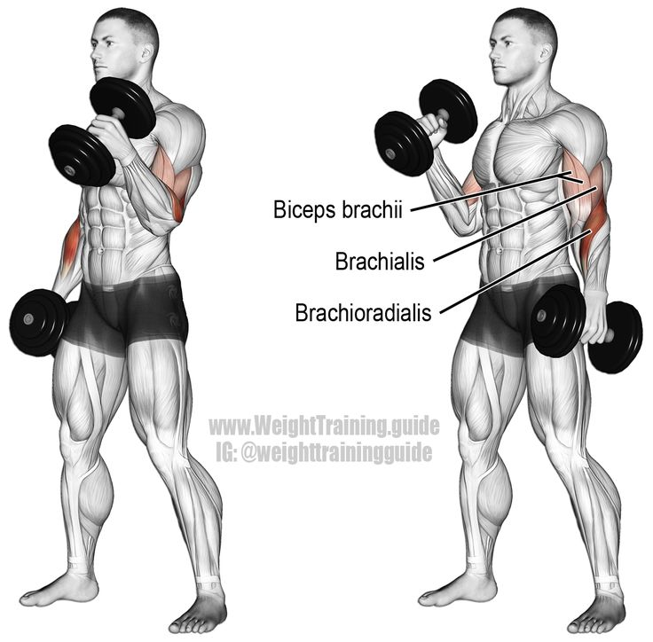 Dumbbell hammer curl. An isolation pull exercise. Muscles worked: Brachioradialis, Biceps Brachii, and Brachialis.