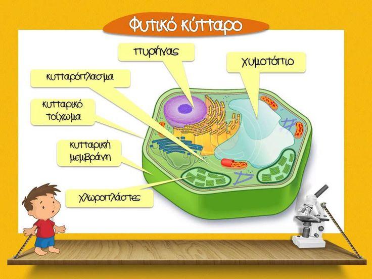 Το κύτταρο