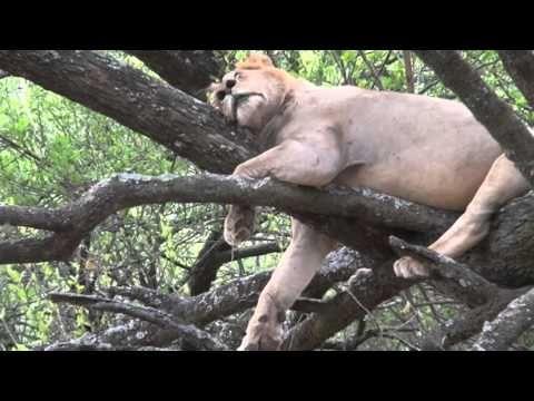 Дикие животные Африки. Озера Африки. Озеро Маньяра/Wild african animals. Lake Manyara