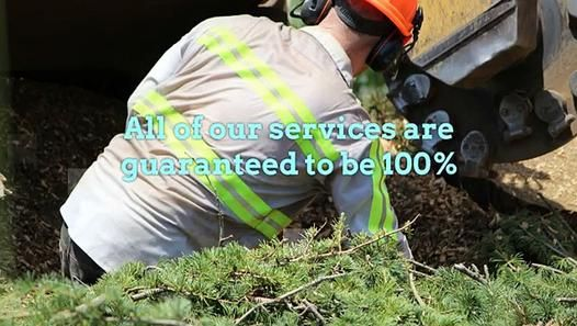 Bay Area Tree Specialists 490 S. California Ave, Palo Alto, CA 94036 (650) 353-5671