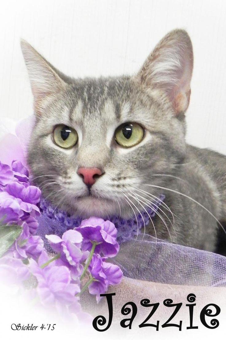 Adopt Jazzie on Cats, kittens, Adoption, Pet adoption