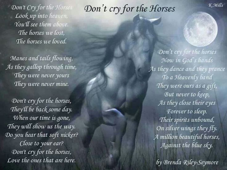 This poem tells us to not cry for the loss of our horses, but after reading it we are all full of tears. The Loss of a beloved horse is never easy.