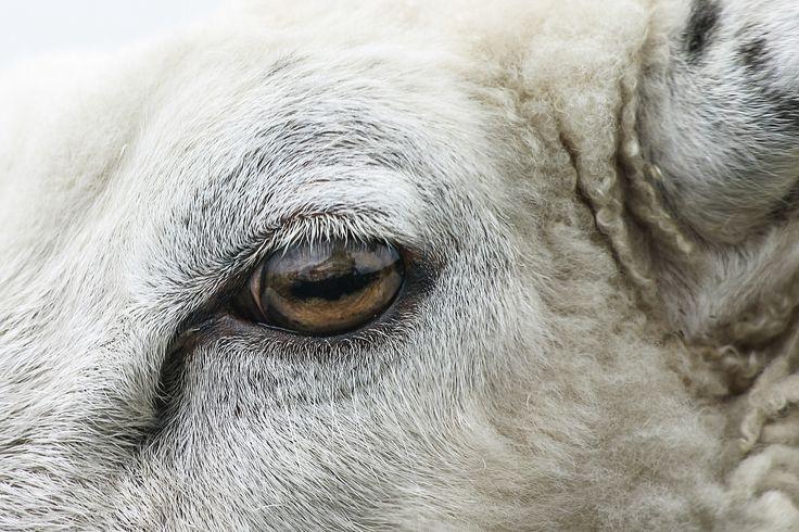 Auge in Auge … Meine 10 Must Do's für jedes Wetter auf der Ostseeinsel Fehmarn entdecken!