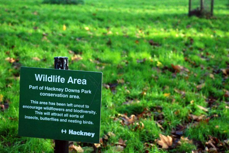 https://flic.kr/p/qn3qwi   HACKNEYDOWNS_PARK_DSC_1153   Wildlife Area. Hackney Downs Park, London (2014).