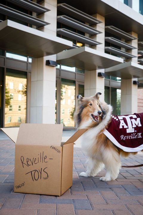 Move In Day 2017 In Aggieland