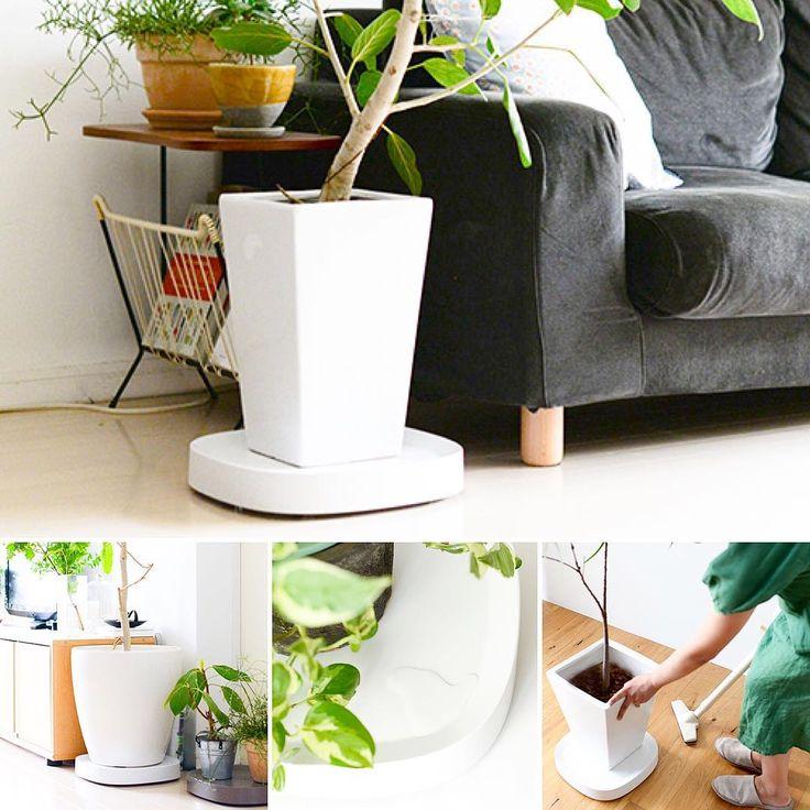 昨日発売したばかりのキャスター付き鉢皿。大きめの観葉植物の取り回しに「あと一歩」という不便を感じていた方には朗報なアイテムだと思います。 ・ 私が感動したポイントは以下。 ⭕️見えないキャスター付きだから掃除のとき楽チン(だからとて、床を傷つけたりグラグラ動きすぎる心配がないのもうれしい) ⭕️納得いかないデザインの鉢皿を合わせなくていい。水受けにもなり拭き取りも簡単。 ⭕️皿は丸でも四角でもないフォルムだから、鉢が丸でも四角でも馴染みやすい。 ・ よくできてるなあと、つくづく。単に便利なだけじゃない暮らしの道具を見つけたときの喜びは大きなものがあります😊 ・ ▶️商品はプロフィールのリンクから、または当店トップページからご覧いただけます