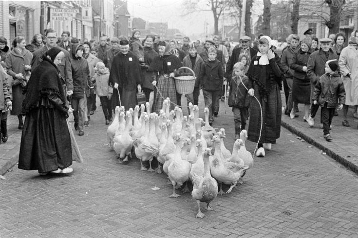 COEVORDEN-GANZENMARKT-MISS GANZENHOEDSTER 1966 De ganzenmarkt in het Drentse dorp Coevorden is ook het podium waar jaarlijks miss-ganzenhoedster wordt gekozen. Vroeger brachten de meisjes de vetgemeste ganzen vlak voor Kerst naar de markt om ze te verkopen. Tegenwoordig is het een meer folkloristische aangelegenheid.Foto: de meisjes brengen de ganzen naar de markt #Drente