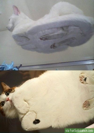 """@Emily Amon Now we know what's happening under the """"Blob"""""""