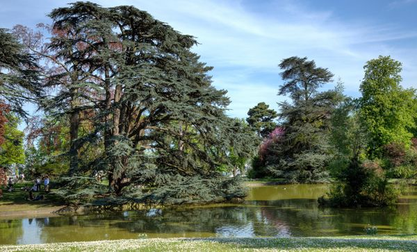Parco di Saint Cloud, Parigi.