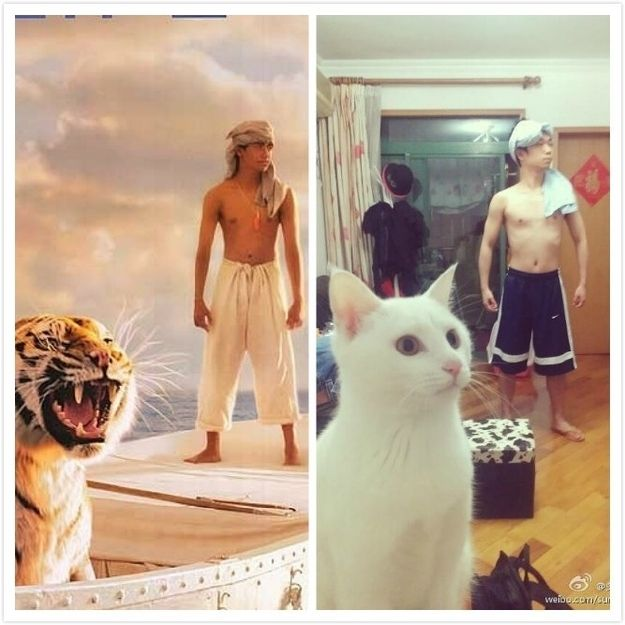 """Breathtakingly Accurate """"Life Of Pi"""" Re-Creation    The cat is really in character"""