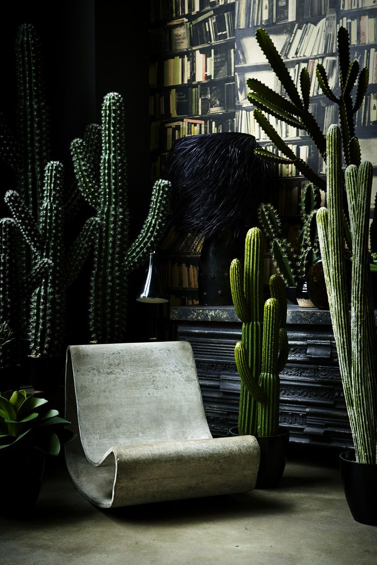 Abigail Ahern cactus collection