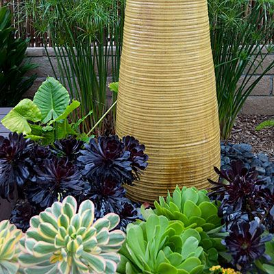 These aeoniums, papyrus, cordylines, kangaroo paws, and small palms need no fertilizer or pesticides—only occasional watering by a drip syst...