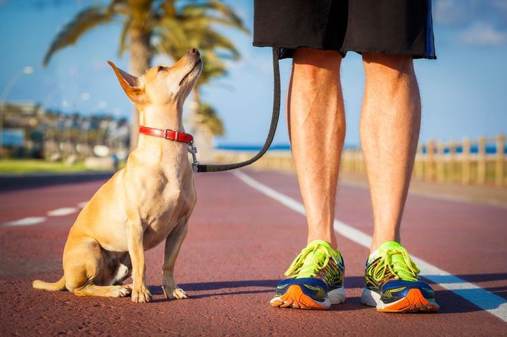 Ask your dog to sit, go, and change paces to keep your walk fun and engaging.