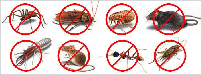 TermitesRus is the best Termites and pest control service provider in Brisbane. We don't provide only termite control service, but also we protect your house and office from all pests. We also deliver pre purchase inspection service for your house or office. Visit us http://www.termitesrus.net/inspection-treatment/