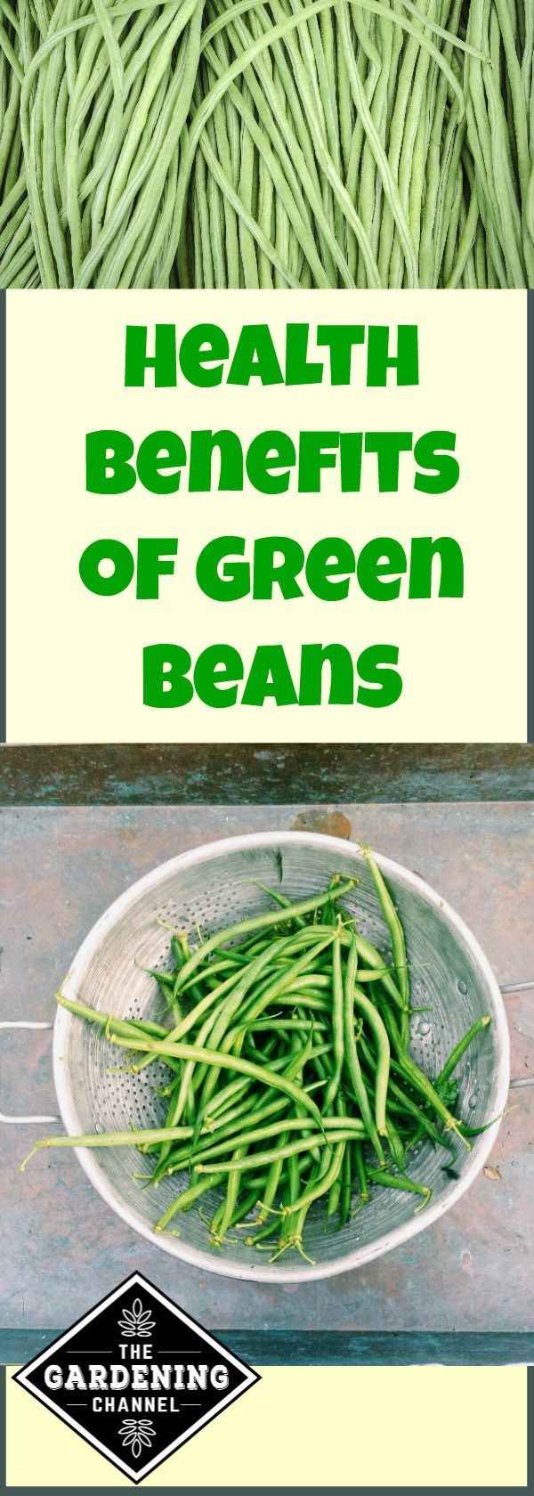 Green beans are easy to grow and they have lots of health benefits.  Try planting this vegetable in your garden next spring.