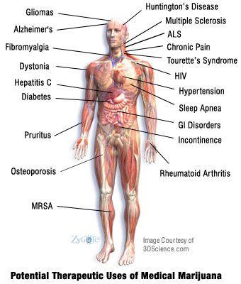 Recent Research on Medical Marijuana