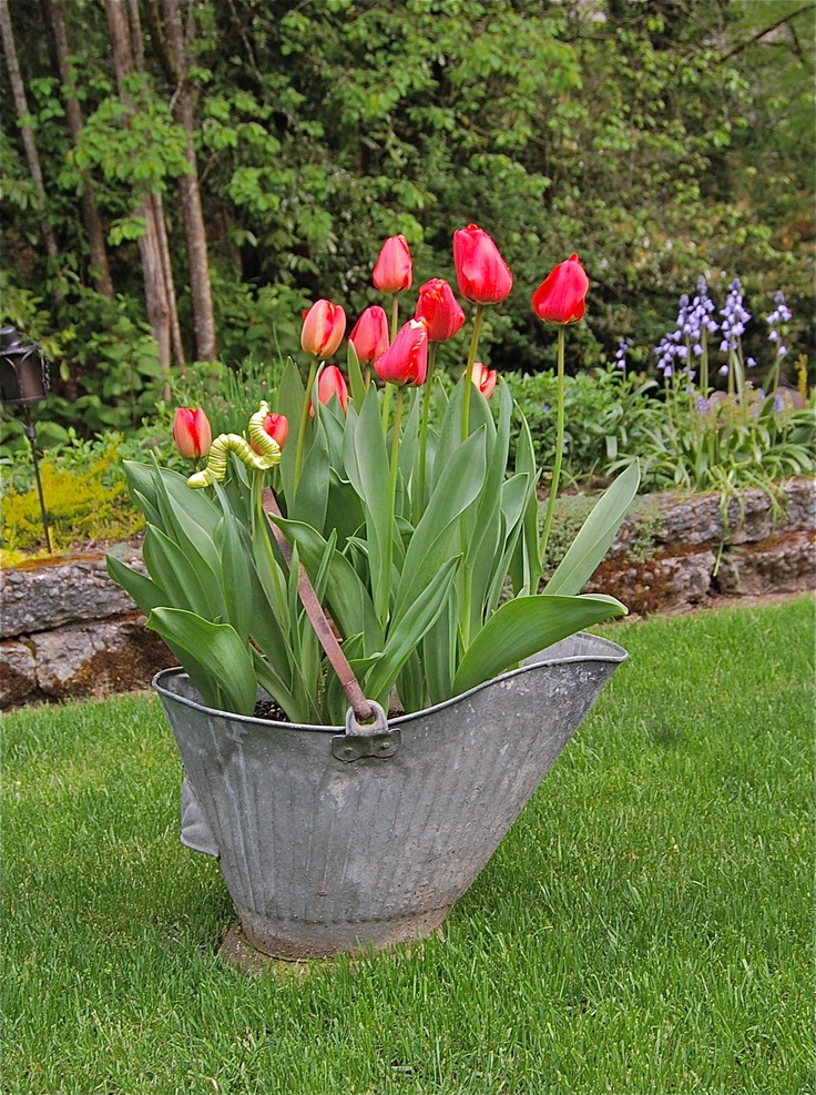 Vintage Coal Bucket as planter.  Tracy Paulsen, At Home Designs
