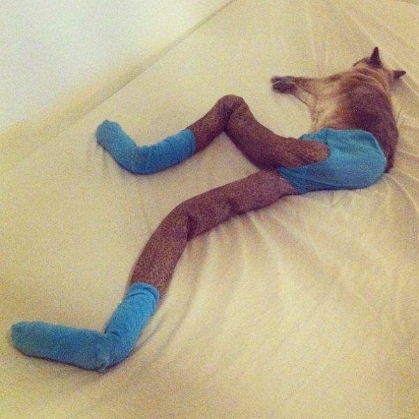 Gatos usando meias calça viram febre na internet