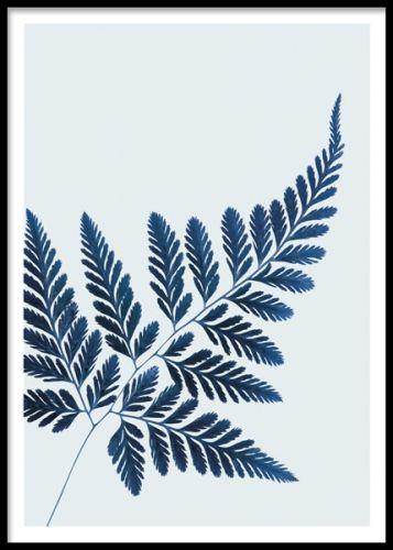 Blue Fern, poster. En snygg och stilren affisch med en ormbunke. Botaniska motiv som detta är stilsäkert och snyggt på väggen, vare sig du har växter i övrigt eller inte. Perfekt att kombinera ihop med andra motiv i liknande botanisk stil eller trevliga texttavlor.