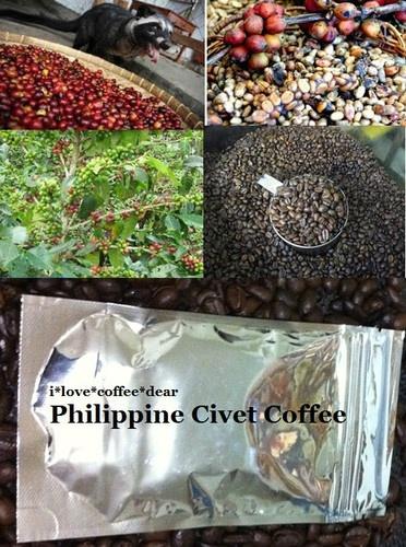 Kopi Luwak - Philippine Civet Coffee  -  Net Weight 100 grams