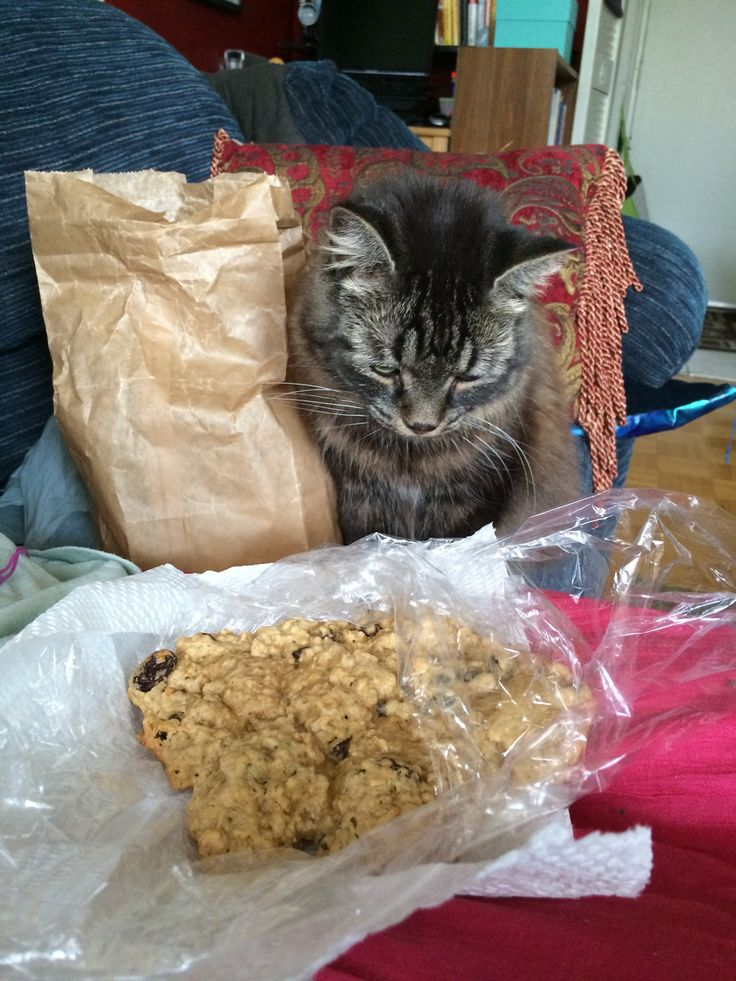 A feline conundrum....to eat or not to eat, that is the question... meow! (got that from Glenn Sevillo's Facebook Friday Shaklee entry LOL)