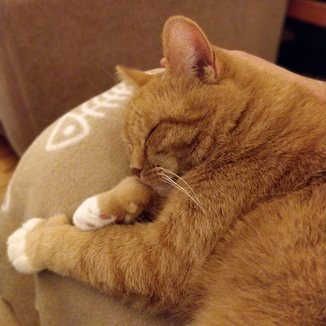 The #cat is sleeping on the armrest of the couch