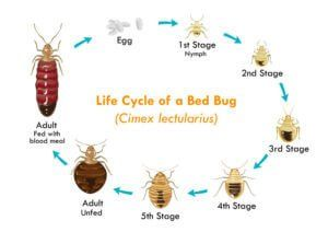 Know what #bugs look like, where #bed #bugs hide and when you will see #bed #bugs here at Affordable Bed Bug Exterminators.