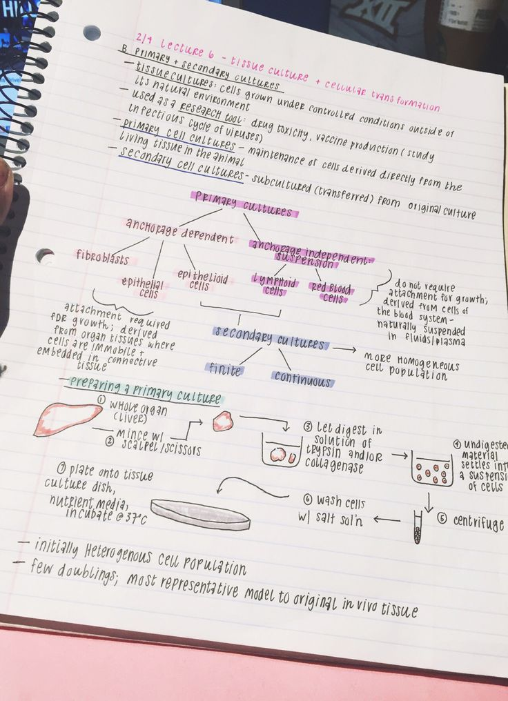 Biology prac notes