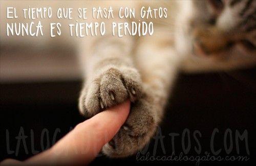 http://www.lalocadelosgatos.com/wp-content/uploads/2013/09/cita-tiempo-gato-500x325.jpg