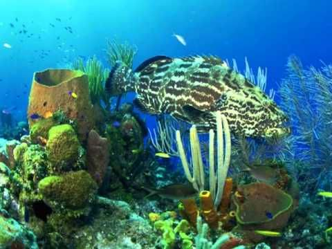 de wonderbare onderwater wereld. the wonderful underwater world. part 1. - YouTube