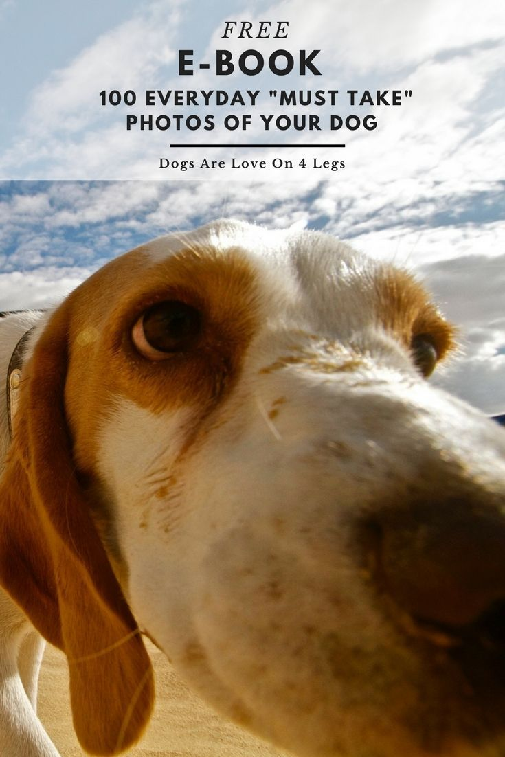 "100 Everyday ""Must Take"" Photos Of Your Dog - FREE E-Book 