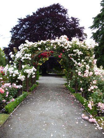 Botanischer Garten - Südinsel - Neuseeland
