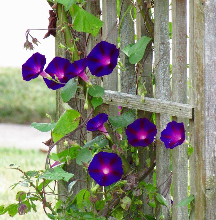If Feels Like Fall Beautiful gardens, Flowers, Bloom