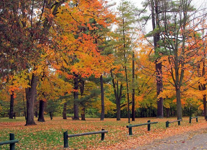 Fall scene at Jackson's Park, Peterborough ON by Annette