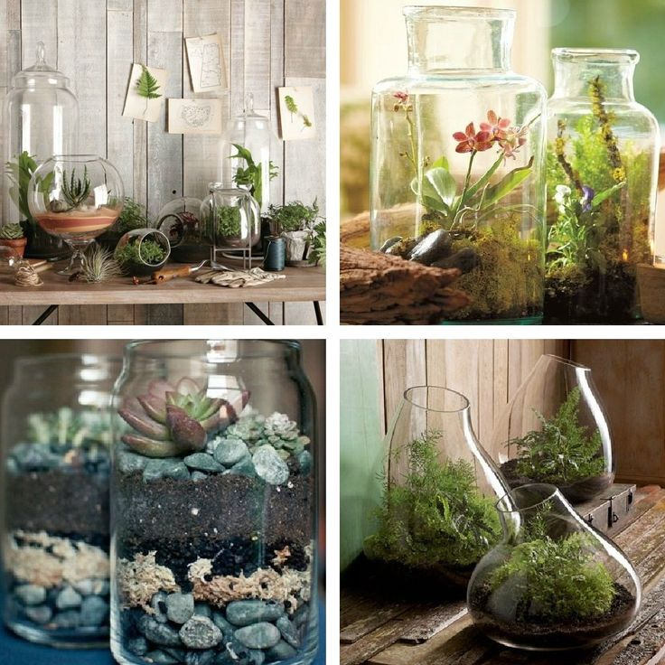 contemporary terrarium ideas