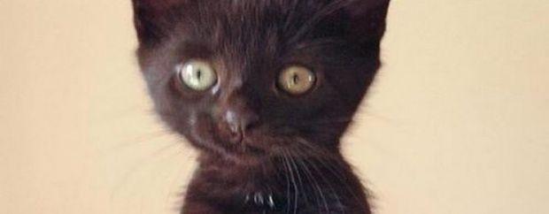 bizar op 06/03/15 om 15:24 16 14.000 euro om moordenaar kat op te sporen Een onbekende schoot vorig jaar de kat dood van een Brits gezin. De vader heeft sindsdien 14.000 uitgegeven aan het opsporen van de dader. Farah -een jong zwarte katje- van een gezin in het Britse Exeter werd vorig jaar door een onbekende doodgeschoten. Het katje werd naar het ziekenhuis gebracht voor een spoedoperatie -ter waarde van 4.000- maar stierf tijdens de operatie. De 24-jarige dochter van het gezin is kapot…