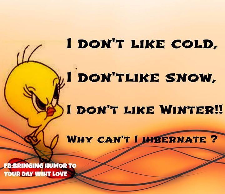Hibernate Funny Quotes Quote Winter Funny Quote Funny Quotes Tweety Bird  Tweety Humor Winter Humor