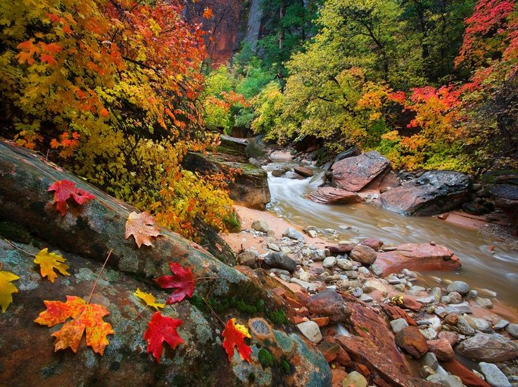 Zion National Park Photos - National Geographic #NatGeoWanderListContest