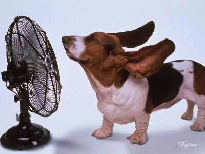 Stay cool out there!