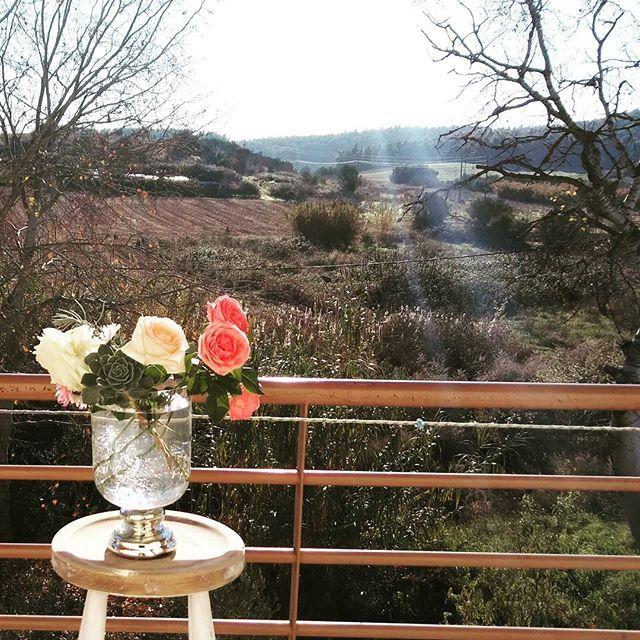 Посморите на мир моими глазами.  Я люблю этот вид с балкона на лес. Божественные розы еще красивее на фоне сонной природы...#цветы #розы #инсталляция #ваза #зимавгреции #балкон #джульеттажилова #хобби #букет #neafokea