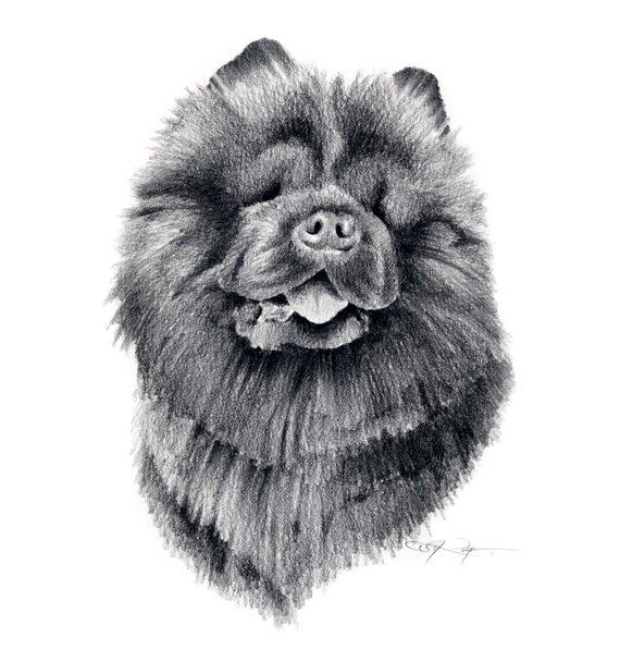 Chow Chow Dog Art Print Pencil Drawing By Artist Dj Rogers In 2020