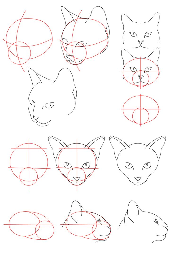 It is a picture of Bright Drawing Cat Face