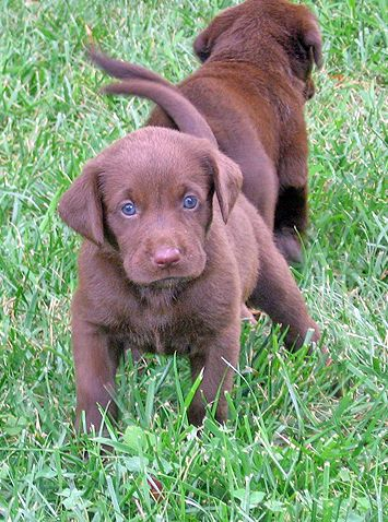 this will be my future doggy!!! his name will be bo :)