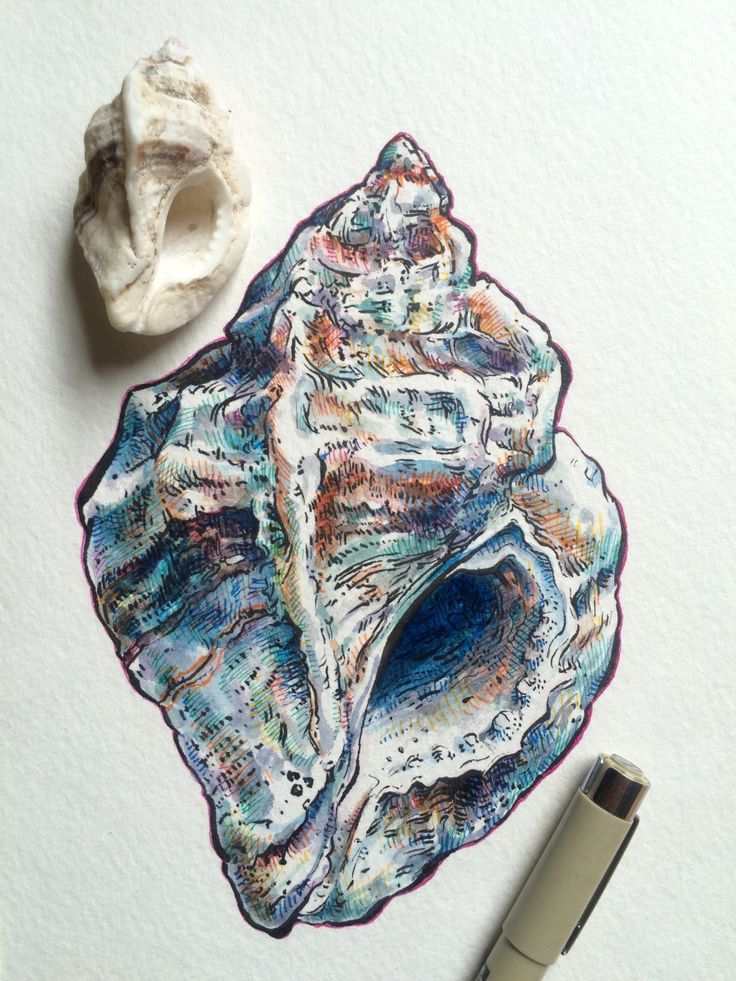 continuing shell study