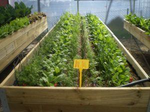 exemple d'association carotte, épinard et poireau en carré ...