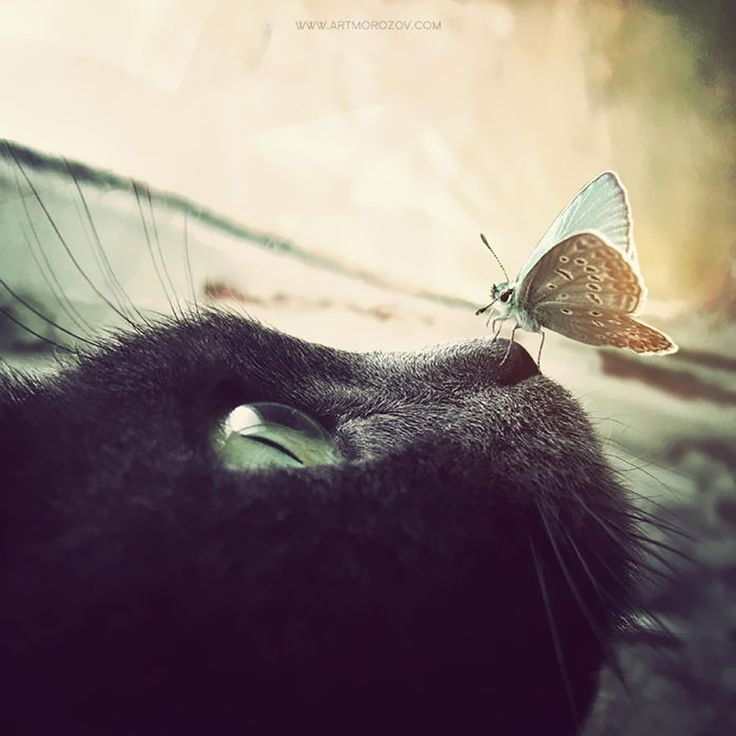 10+ Animals With Butterflies Look Like Disney In Real Life-Cat And Butterfly